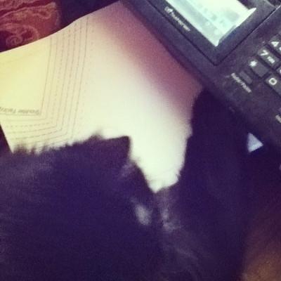 helper cat
